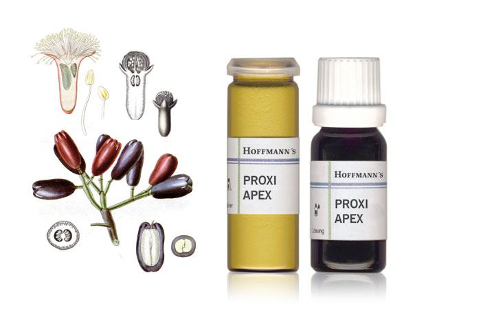 Proxi-Apex-Nelken-hoffmann-dental-material-manufaktur-product